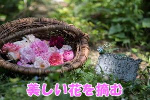 美しい花を摘む