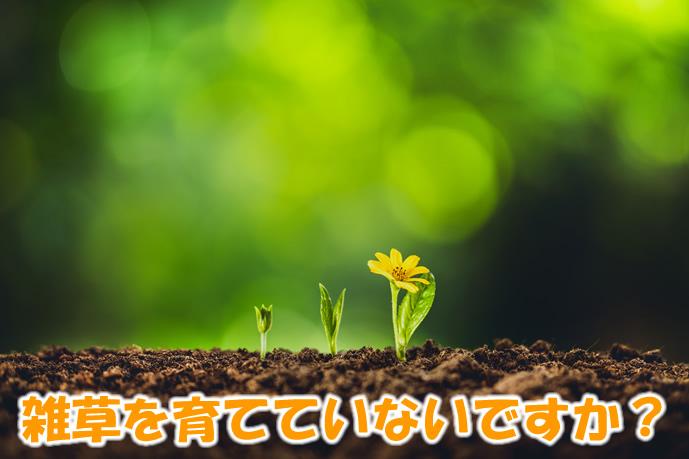 雑草の種を育てていないですか?